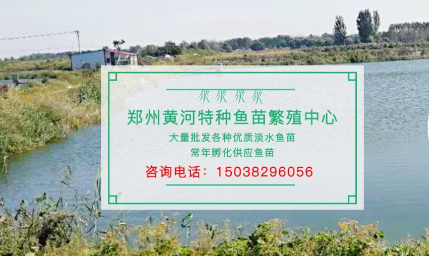 郑州市惠济区建国淡水鱼苗销售部