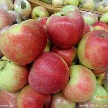 藤木苹果批发藤木苹果价格山东藤木苹果图片