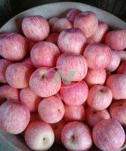 纸袋红富士价格红富士苹果批发价格