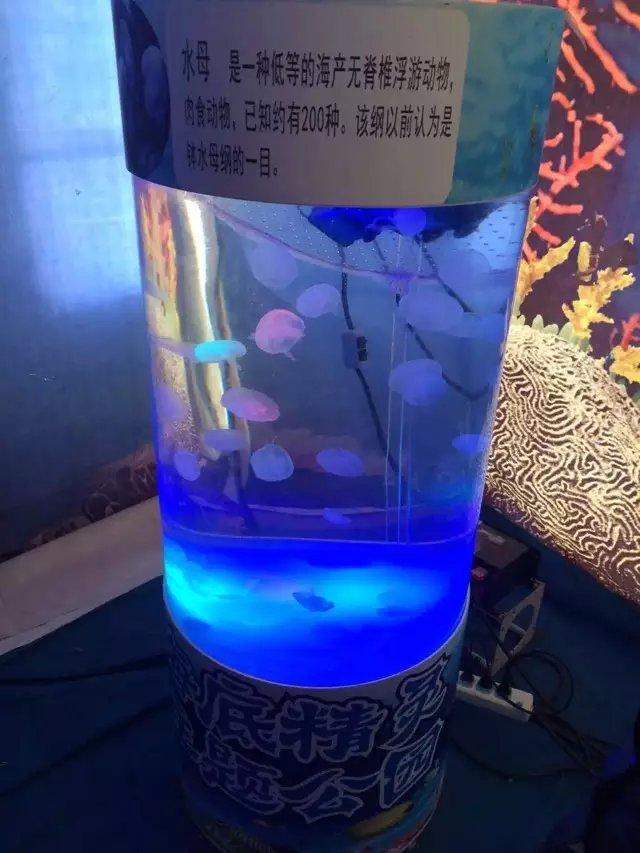 提供动物表演节目海狮互动鱼缸海洋生物展主题布置