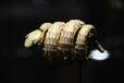 台州温岭宝格丽戒指首饰哪里回收