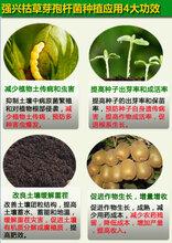 1000亿/克农用枯草芽孢杆菌可喷施灌根滴灌促使土壤中的有机质分解成腐殖质,极大的提高土壤肥效;