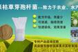 50亿/克胶冻样芽孢杆菌—胶质芽孢杆菌解磷、解钾、固氮、大幅提高肥料利用率,减少化肥用量