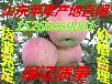 红将军苹果红富士苹果