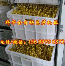 福建莆田大型豆芽机器供应商,全自动豆芽机械设备多少钱一套,新型豆芽机器价格,多用型豆苗机器厂家