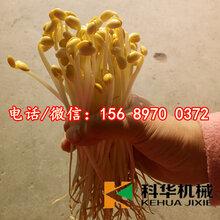 重庆南岸绿色无公害全自动豆芽机械设备价格,小型豆芽机器厂家,自动豆芽机器多少钱一台,全自动豆苗机器生产商
