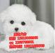 佛山纯种比熊犬大概价格佛山哪里有卖比熊幼犬