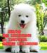 惠州在哪里有卖宠物狗惠州哪里买萨摩耶幼犬