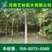 烟台直销10公分红叶碧桃/青桐报价159-9372-0369