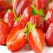 連云港法蘭地草莓苗哪里有賣的