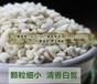 新貨福建香糯薏米寧化淮土小薏米仁優質薏仁米500g賽蒲城貴州