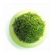 大量批发绿茶信阳毛尖绿茶茶叶500g
