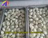 湖南包饺子的机器多少钱饺子机厂家!