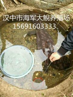 娃娃鱼大鲵养殖技术/娃娃鱼大鲵繁殖技术/大鲵养殖场图片3