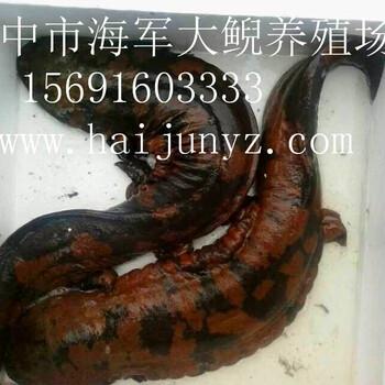 贵州娃娃鱼养殖批发,娃娃鱼养殖水质标准,大鲵养殖场