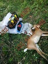 柳州野猪捕猎器厂家电捕捉野猪机器批发图片