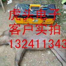 贵州电野猪的捕猎器多少钱一台