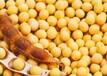 求购大豆/黄豆绿豆黑豆豌豆