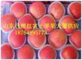 近期山东烟台栖霞苹果价格趋势-全国红富士苹果行情报道