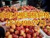 上海油桃價格行情浙江油桃產地價格江蘇油桃價格行情日照油桃價格
