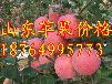 上海紅富士蘋果批發價格上海蘋果基地上海蘋果多錢一斤上海蘋果交易市場煙臺蘋果價格