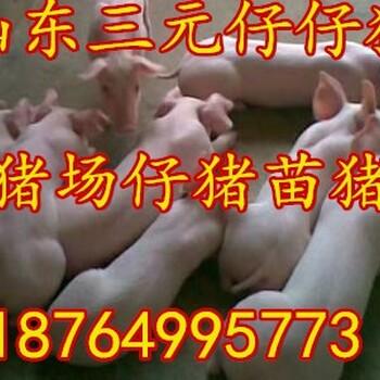 江西三元仔猪价格