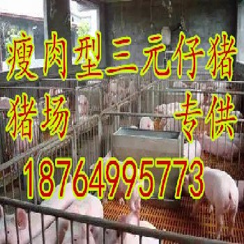 福建15公斤三元仔猪价格福建仔猪小猪批发基地