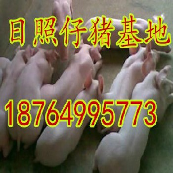 仔猪ag系列产品|官方苗猪ag系列产品|官方山东约克仔猪ag系列产品|官方价格二元仔猪ag系列产品|官方