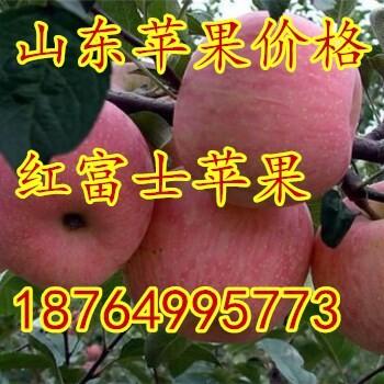 山东美八苹果产地价格日照红富士苹果批发价格江苏苹果价格