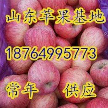 临沂冰糖心苹果价格山西冰糖心苹果基地河北冰糖心苹果价格栖霞冰糖心苹果价格