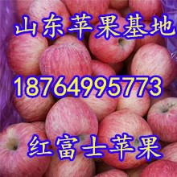 日照苹果价格