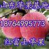 浙江红富士苹果批发价格浙江苹果基地浙江冰糖心苹果价格