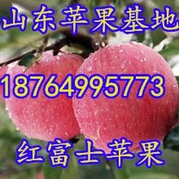 浙江红富士苹果价格