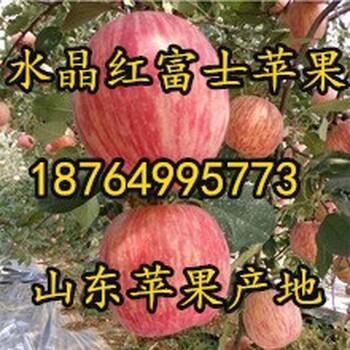 山东福建红富士苹果批发价格福建苹果基地行情福建冰糖心苹果价格