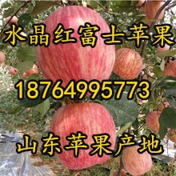 重慶紅富士蘋果價格重慶蘋果批發基地重慶蘋果產地