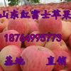 江苏红富士苹果批发价格浙江红富士苹果基地浙江冰糖心苹果价格江苏冰糖心苹果价格