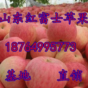 山东冰糖心苹果价格