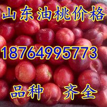 北京油桃价格天津油桃价格河北油桃价格山西油桃价格图片