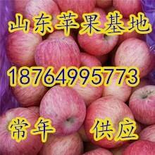 山東陜西美八蘋果批發價格日照美八蘋果價格臨沂美八蘋果價格圖片