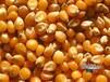 常年求购玉米,大豆,菜饼碎米高粱,棉粕