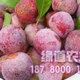 优质红脆李果子