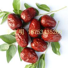山東新疆紅棗批發市場在哪里圖片