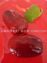 正规新疆红枣厂家直销价格低图片