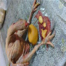 在广东,鸡宝这种动物结石药用价值的市场价格高吗图片