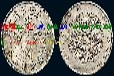 北海市钱币鉴定中心在哪里?光绪元宝有多少版本?