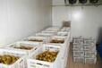 乌鲁木齐市水果蔬菜保鲜冷藏库建设