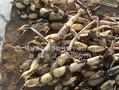 求购浅水藕防水布浅水藕防水布价格图片