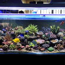 濟南市魚管家魚食魚藥線上免費看魚病圖片