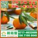 商丘市农贸市场特早柑子产地直销_农贸市场特早柑桔最新行情