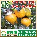 南阳淅川县特早柑桔销售价格_淅川县特早柑子供应商